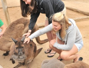 Vannasse makes friends with a Melbourne Zoo kangaroo.             Courtesy