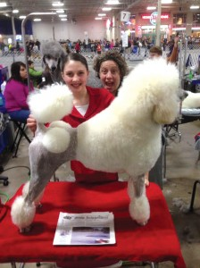 Alex Herrmann and her Standard Poodle 'Brie' had fun with Julie Pantages at the First Company Governor's Foot Guard Dog Show in Springfield MA on February 7.  The Stow Independent went along for the fun!